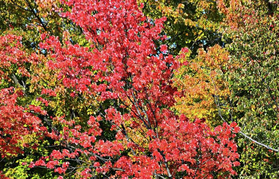 Fall foliage emerges from a treeline along Serviceberry Road Tuesday Oct. 1, 2013, in Colonie, NY.  (John Carl D'Annibale / Times Union) Photo: John Carl D'Annibale / 00024076A