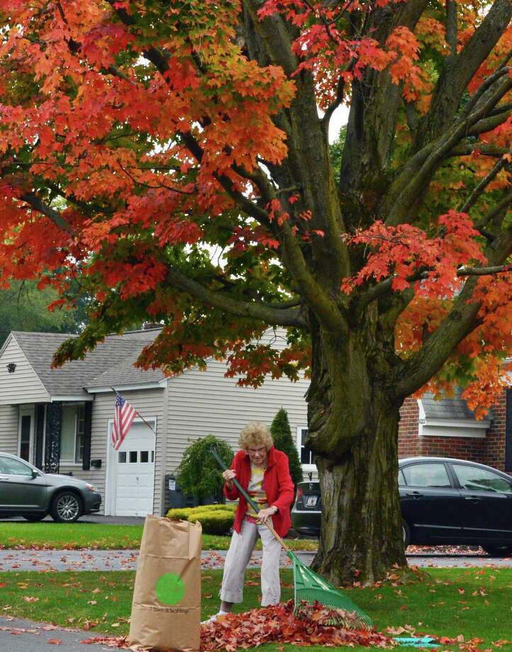 Joan Thuotte rakes leaves under a sugar maple in her front yard Wednesday Oct. 2, 2013, in Rotterdam, NY.  (John Carl D'Annibale / Times Union) Photo: John Carl D'Annibale / 00024076A