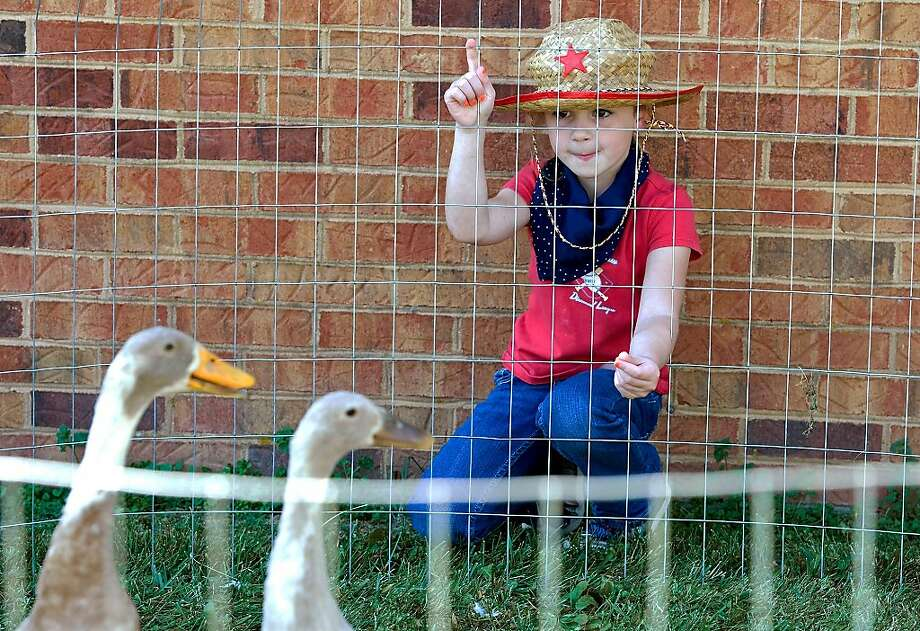 I think she's is trying to tell us something: First-grader Lily Brown tries to get the attention of a pair of 