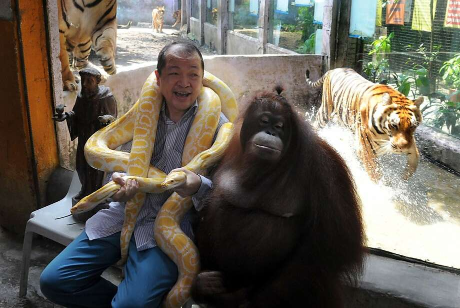 On the eve of World Animal Day,Malabon Zoo owner Manny Tiangco, his pet orangutan (also named Manny) and a couple of albino pythons spend some quality time by the tiger enclosure at the suburban Manila zoo. Tiangco said he was trying to raise awareness of the need to protect wild animals and conserve the environment. Photo: Jay Directo, AFP/Getty Images