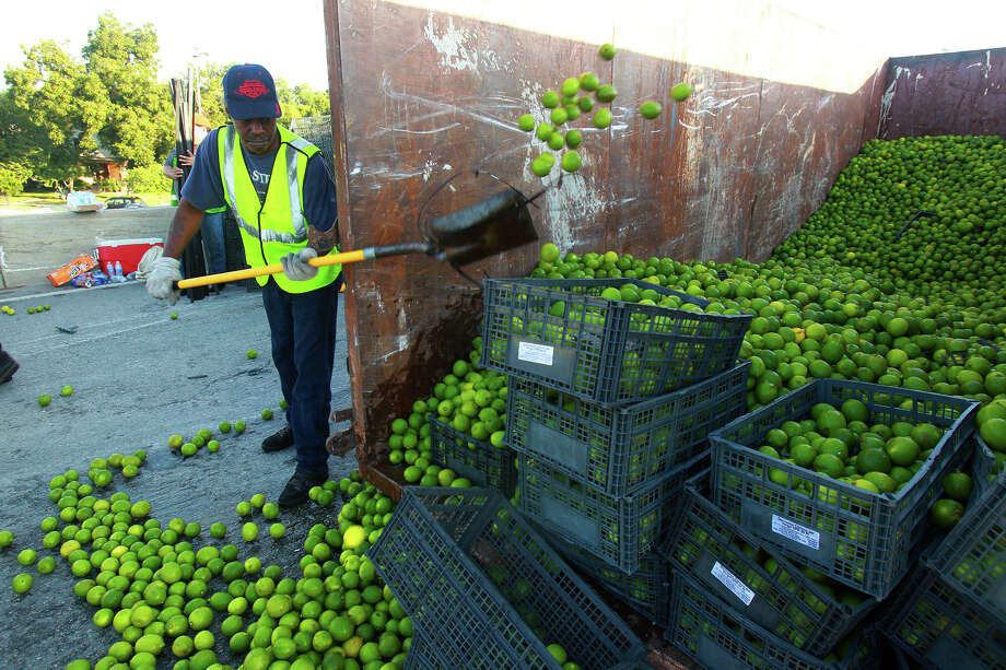 A clean up crew removes limes from a truck that crashed Thursday morning October 3, 2013 on the freeway ramp connecting IH-37 southbound to IH-10 westbound. Police at the scene said the driver and the passenger of the 18-wheeler tractor trailer rig were not injured and no other vehicles were involved. Clean up efforts are still going on and the ramp is expected to be opened back up some time between 10:00 a.m. and noon. Photo: JOHN DAVENPORT, SAN ANTONIO EXPRESS-NEWS / ©San Antonio Express-News/Photo may be sold to the public