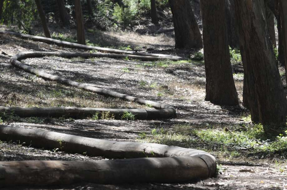 "Andy Goldsworthy's last Presidio project ""Wood Line' was completed in 2011. Photo: Skyler Reid, Special To The Chronicle"