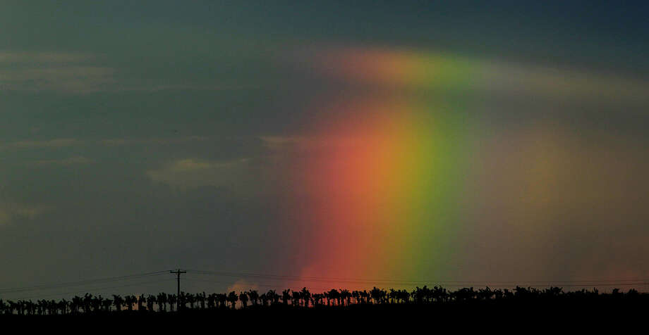 A rainbow appears behind a vineyard near the small West Texas town of Plains. The vineyard is part of the Newsom Family Vineyards and is run by Nolan Newsom, 27, who is a third-generation grape grower. Photo: John Davenport / San Antonio Express-News