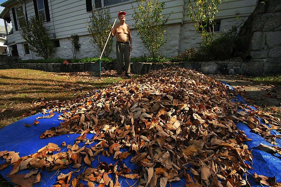 "Avert your eyes, children: ""I had to take my shirt off because it's too hot,"" says 86-year-old leaf raker Carl Helcoski as he scandalizes the East Mountain section of Scranton, Pa. Photo: Butch Comegys, Associated Press"