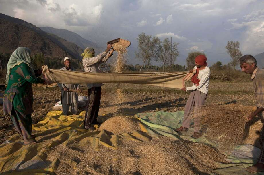 India: Kashmiri farmers separate grain from the chaff after harvest in Boras village, about 40 kilometers (25 miles) northeast of Srinagar, India. Agriculture is the main source of food, income, and employment in rural areas. Photo: Dar Yasin, Associated Press