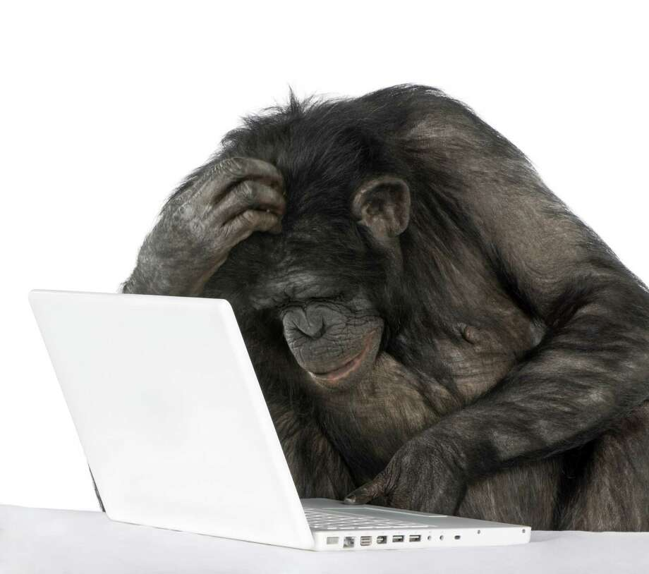 monkey (Mixed-Breed between Chimpanzee and Bonobo) playing with a laptop (20 years old) in front of a white background Photo: Eric IsselŽe / Eric IsselŽe - Fotolia