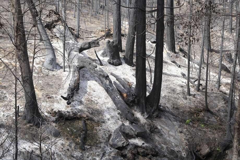 Burned-out forest, typical scene across much of burn area Photo: Tom Stienstra/The Chronicle