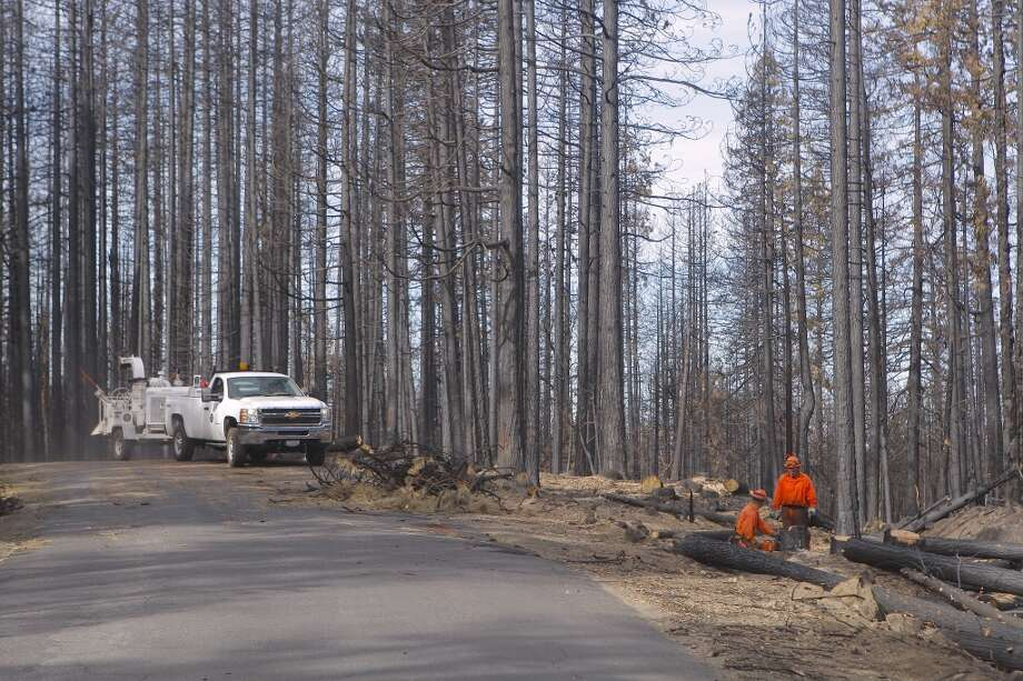 ". . . and crews then cut down ""hazard trees"" that could fall at any time Photo: Tom Stienstra/The Chronicle"
