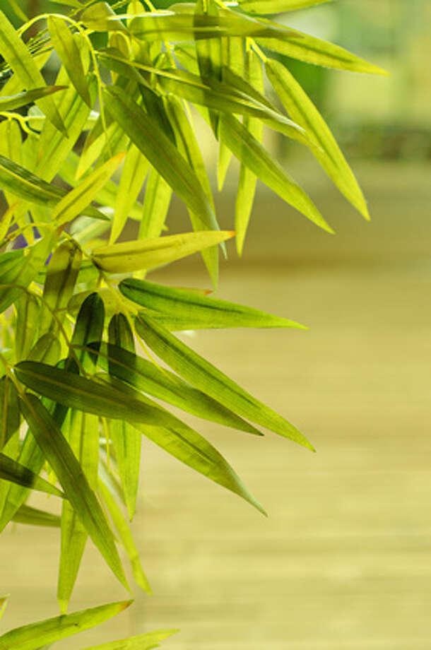 Bamboo palm Photo: Roxana - Fotolia / Roxana - Fotolia