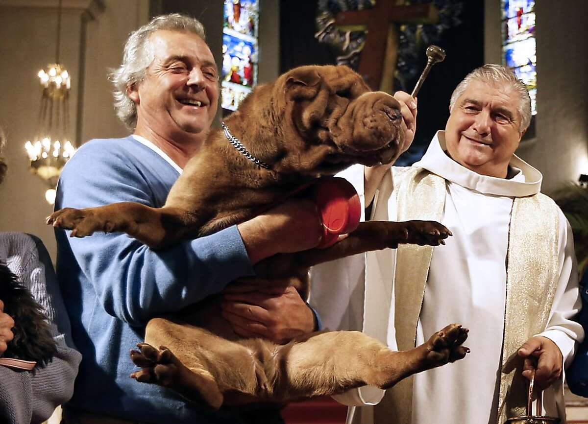 Please cure me of my premature wrinkles, Father: The priest of Saint-Pierre-d'Arene's Church in Nice, France, blesses a Shar Pei during a Mass for animals.