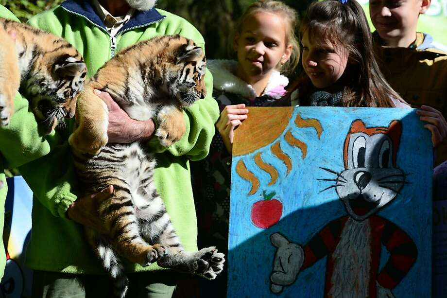 That's supposed to be me? Two young visitors present their artwork to a pair of 2-month-old Siberian tiger cubs at  