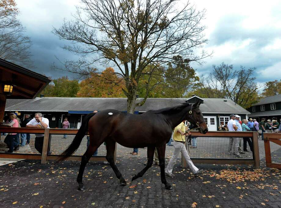 Blue sky on one side of the tree and a threatening sky on the other side as horses move on the sales grounds Monday afternoon Oct. 7, 2013 at the Fasig Tipton Saratoga Fall Mixed & Horses of Racing Age sale at the Fasig Tipton sales pavilion in Saratoga Springs, N.Y.    (Skip Dickstein/Times Union) Photo: SKIP DICKSTEIN / 00024146A