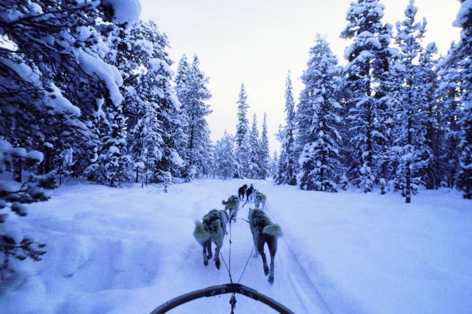 WINTER | Lapland, Sweden A team of huskies drives its musher through the quiet, deep winter snows of Lapland'€™s woodlands.