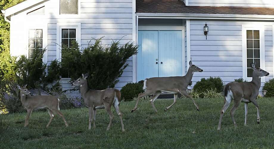 Moving to the suburbs: Cincinnati is permitting bow hunting on specified trails 