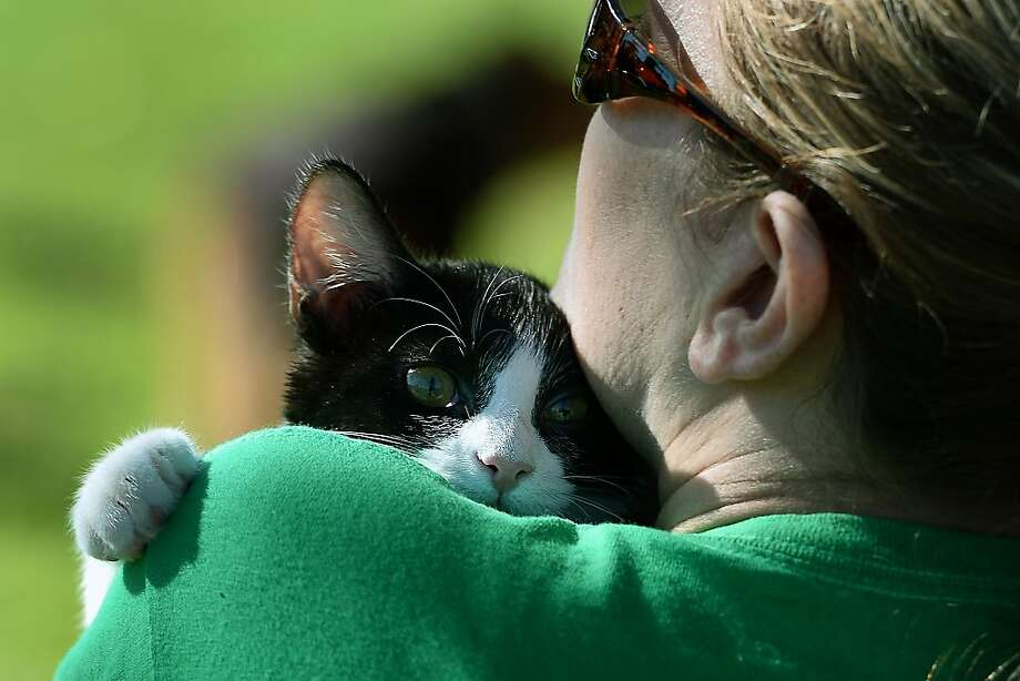 Can't we just go home instead? Maria clutches the shoulder of her owner, Stacie McCarren, during the Blessing of the Animals at Banita Creek Park in Nacogdoches, Texas. Photo: Andrew D. Brosig, Associated Press