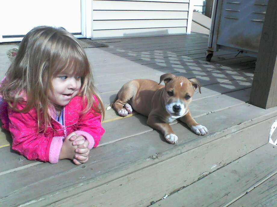 The wonderful sunshine the Capital Region's been seeing offered the right opportunity for Rick LaJoy's daughter Jordan, age 2, to hang out with their  puppy, Rocco, who is eight-weeks old, in Colonie.