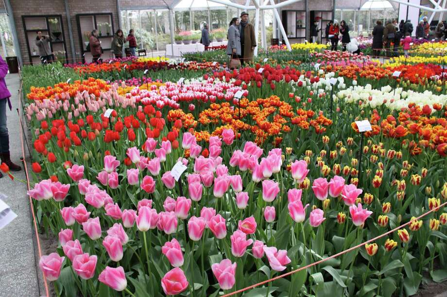 "Deb Osborne will share her travel adventures in a talk titled ""Tulips and Windmills"" at the Cyrenius H. Booth Library in Newtown on Tuesday, Oct. 22. Photo: Contributed Photo"