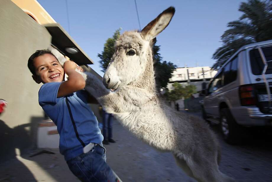 Baby burros are a kick: Six-year-old Laith Al-Aklok dances with his donkey foal in Deir Al Balah, Gaza Strip. Photo: Adel Hana, Associated Press