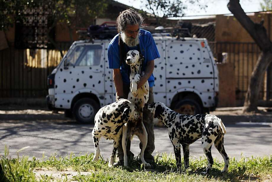 "He hopes to have 101 some day:Nestor Vergara, the ""Dalmatian Man,"" pets two of his 42 spotted dogs in front of his home in Padre Hurtado, Chile. Bet the neighbors love him. Photo: Luis Hidalgo, Associated Press"