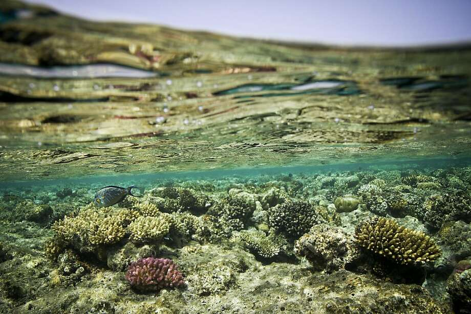 If greenhouse emissions keep up their steady escalation, coral reefs like this one in the Red Sea near Marsa Alam, Egypt, will continue to deteriorate as temperatures rise to unprecedented levels. Photo: Tara Todras-whitehill, New York Times