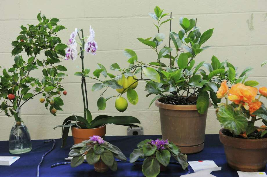 "Flowers and fruit sit on a table at the ""50 Shades of....Gardening"", a small standard flower show, at Eastern Greenwich Civic Center, in Old Greenwich, Conn., Wednesday Oct, 9, 2013. The show was presents by Knollwood Garden Club, Riverside Garden Club and the Garden Club of Old Greenwich. Photo: Helen Neafsey / Greenwich Time"
