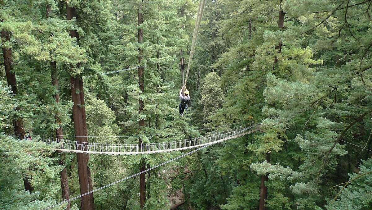 Zipping from tree to tree on the Redwood Canopy Tour in the Santa Cruz Mountains.