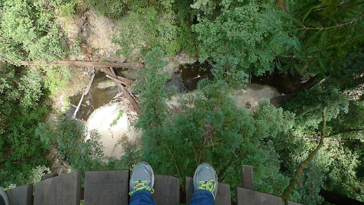 Bean Creek lies 140 feet below one of the redwood-tree platforms in Mount Hermon Adventures' Redwood Canopy Tour.