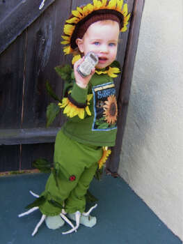 "SUNFLOWER (2007): From father Mark Jobson: ""Here's Lily, who forsook her namesake for another varietal. No, I've never done anything like this. Yes, I gouged myself with needles, and burned myself with the glue gun. Small badges of honor for one yanked-out-by-the-roots Sunflower, with bugs."" Photo: Courtesy Mark Jobson"