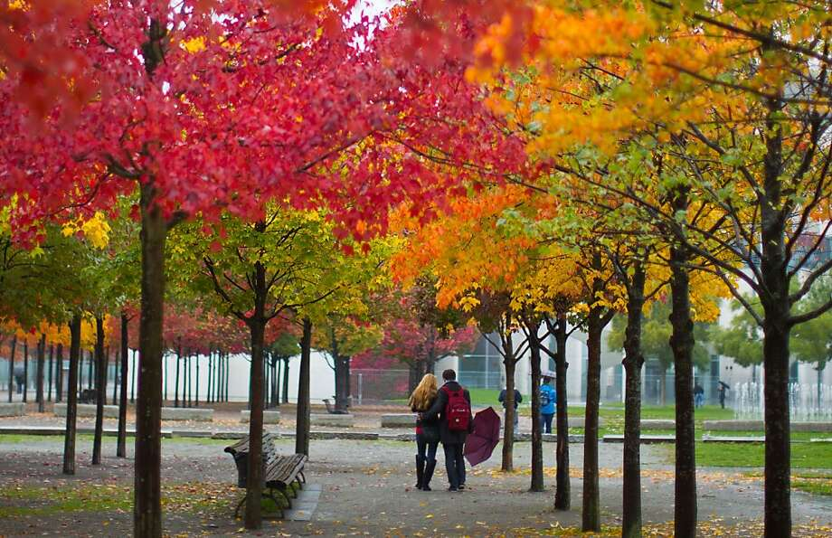 Fall color brightensa park on a rainy day in Berlin. Photo: Wolfgang Kumm, Associated Press