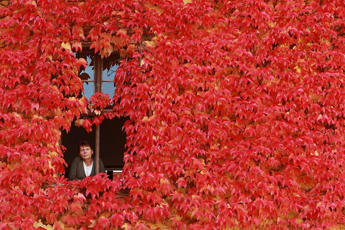 An ivy-covered home in Ballenstedt, Germany, changes color with the seasons.