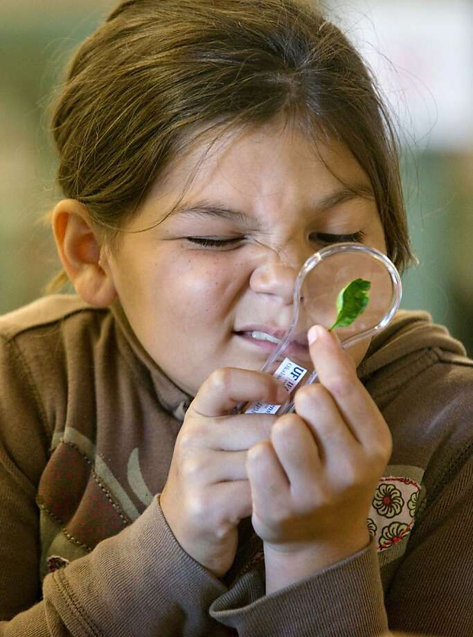 My, what a hairy little face you have: Corrie Hennerberg squints to examine a tiny insect on a leaf during a class field trip to the Northwest 
