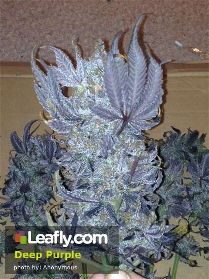 Here's  how Leafly.com describes the effects of this strain, based on user submissions: Deep Purple - Deep Purple was created to include the best traits from Purple Urkle and bring out more of that incredible grape taste.  A strong indica high, Deep Purple is calming and relaxing. Photo: Courtesy Of Leafly.com