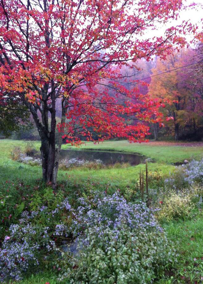 "Every morning Barbara Nuffer takes a 3-mile walk along what she calls her ""beautiful dirt road"" in the town of Nassau. ""The mist and fall colors were breathtaking on this morning. The asters along the creek are in peak bloom as the maple flames red,"" she says. The scene was completely changed the next day when the rain dropped a lot of the leaves. Sights along the way include a heron, a kingfisher, turkeys, cows and horses ? ""or just a beautiful sky."" (Barbara Nuffer)"