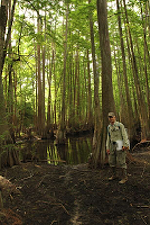 A Bayou Land Conservancy volunteer performs a survey at the Bender Preserve. Photo: Provided By Bayou Land Conservancy