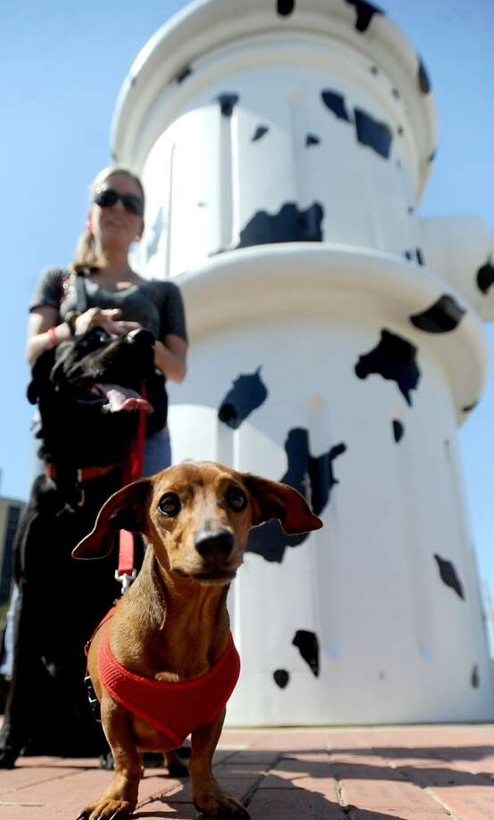 Doxi poses for a portrait in front of the giant fire hydrant during Dogtoberfest downtown Beaumont, Saturday. Tammy McKinley/The Enterprise Photo: AP