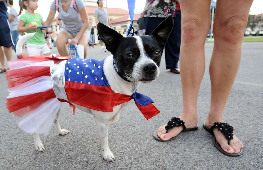 Roxy, a 4 year old rescue dog, participated in the dog style show at Dogtoberfest on Saturday, October 13, 2012 at the Giant Fire Hydrant at the Fire Museum in downtown Beaumont. Photo taken: Randy Edwards/The Enterprise