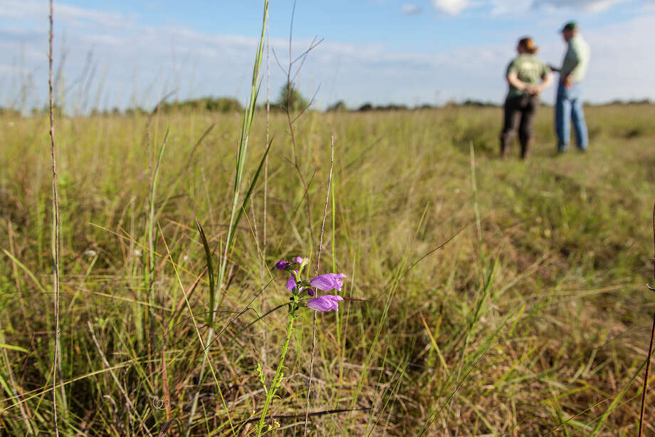 The Lawther-Deer Park Prairie hosts more than 300 species of native Texas prairie plants and grasses, scores of butterflies and dragonflies, and at least 79 species of birds.  Photo Credit:  Kathy Adams Clark.  Restricted use. Photo: Kathy Adams Clark / Kathy Adams Clark/KAC Productions
