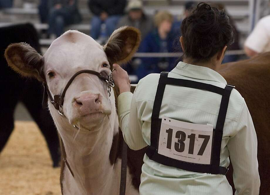 The Grand National Rodeo, Horse Show and Livestock Show comes to the Cow Palace in Daly City. Photo: Phil Doyle