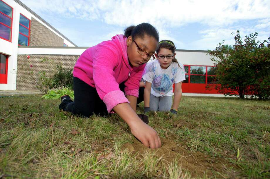 Isis Clarke, 10, helps plant bulbs during a clean-up at Turn of River Middle School in Stamford, Conn., on Saturday, October 12, 2013, to prepare the courtyard for a dedication to Carol Pavia, who worked in the office at the school and died in 2012. Photo: Lindsay Perry / Stamford Advocate