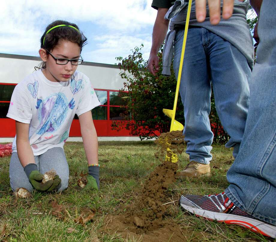 Charlotte Long, 9, helps plant bulbs during a clean-up at Turn of River Middle School in Stamford, Conn., on Saturday, October 12, 2013, to prepare the courtyard for a dedication to Carol Pavia, who worked in the office at the school and died in 2012. Photo: Lindsay Perry / Stamford Advocate