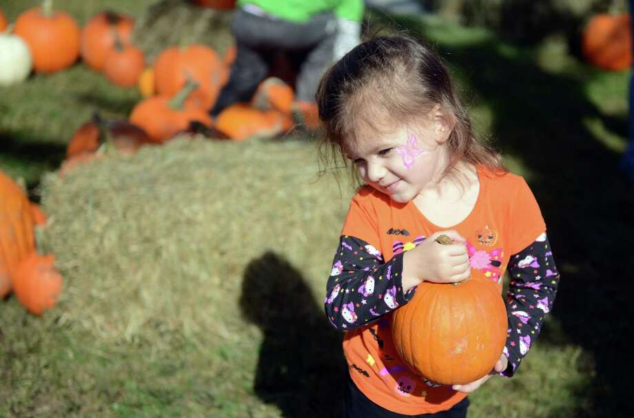 Taylor Turbeville, 3, of Seymour, picks a pumpkin just her size during the Boys and Girls Club of Milford's Pumpkins on the Pier fall festival Saturday, Oct. 12, 2013 at Walnut Beach in Milford, Conn. Photo: Autumn Driscoll / Connecticut Post