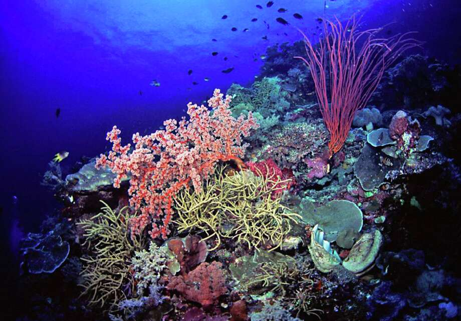 This undated handout photo provided by Marinelifephotography.com shows a reef slope densely covered by soft corals in Southeast Sulawesi, Indonesia. A new study on the timing of climate change calculates the probable dates for when cities and ecosystems across the world would regularly experience never-before-seen hotter environments based on about 150 years of record-keeping. These are the dates when every year is hotter than old hottest annual record. This means the old blistering heat of people's memories will eventually seem unusually cool in comparison to the warming years to come. Coral reef species are the first to be stuck in a new climate that they haven't experienced before and are most vulnerable to climate change, Mora said. Coral reefs will be in that new regime around 2030. Photo: Keoki Stender, AP / AP2013