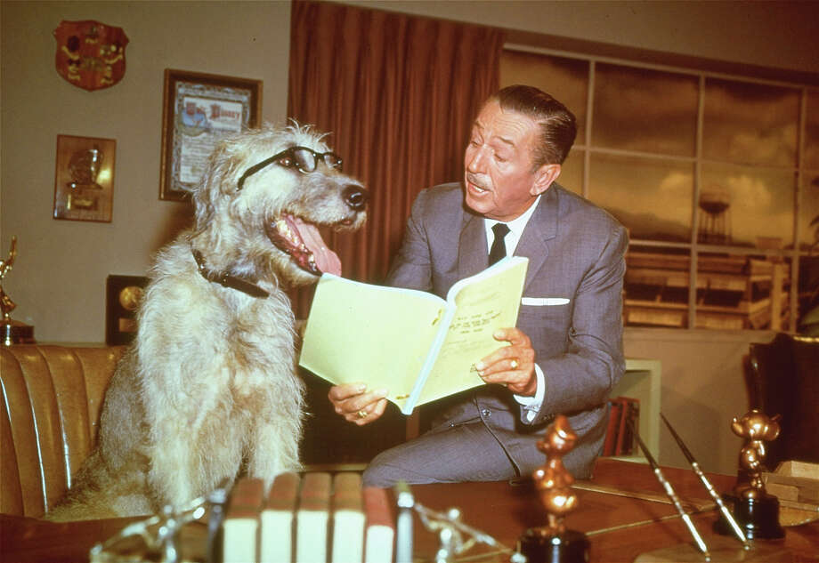 December 15, 1966: Walt Disney died of lung cancer at age 65.Above: This is a December 23, 1965 photo of film animator and producer Walter Disney, in his office pretending to read a script with a dog, seated behind Disney's desk. Photo: ASSOCIATED PRESS / AP1965