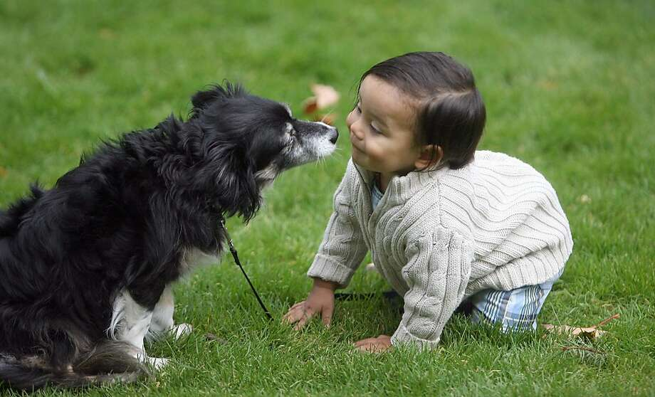 Four-legged friends: Makai Luke, 13 months, sniffs his family's other quadriped, Cassie the dog, at Evergreen-Rotary Park in 