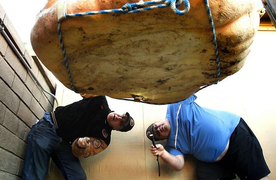 Judges Rob Globus (left) and Ron Root inspect the bottom of a pumpkin before it is weighed at the 40th Annual Safeway World Championship Pumpkin Weigh-Off in Half Moon Bay. Photo: Sarah Rice, Special To The Chronicle