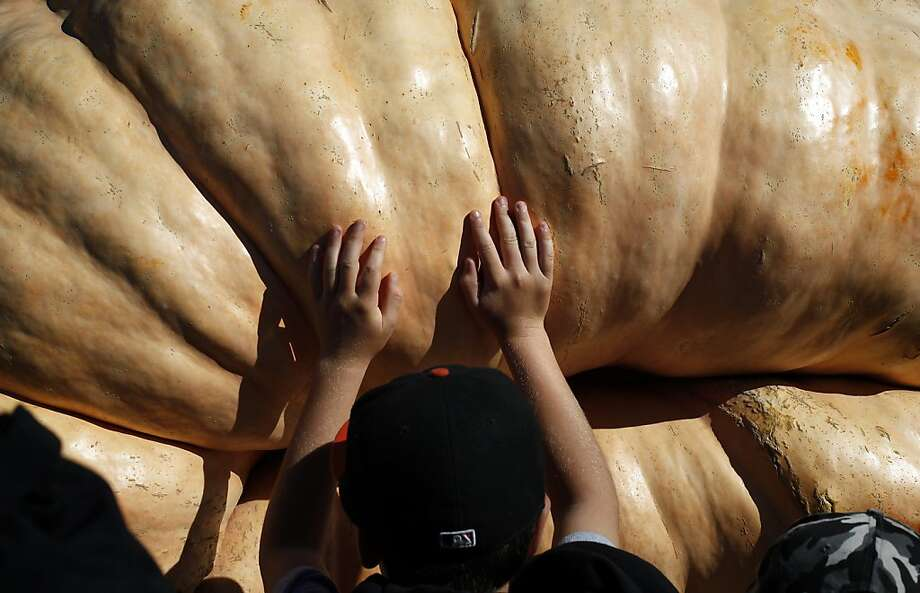 Children rush to touch Gary Miller's 1,985-pound pumpkin after it won the weight competition at the 40th Annual Safeway World Championship Pumpkin Weigh-Off in Half Moon Bay, Calif., on Monday, October 14, 2013. Photo: Sarah Rice, Special To The Chronicle