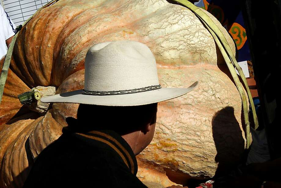 One of the largest three pumpkins at the 40th Annual Safeway World Championship Pumpkin Weigh-Off  is lifted onto the scales in Half Moon Bay, Calif., on Monday, October 14, 2013. Photo: Sarah Rice, Special To The Chronicle