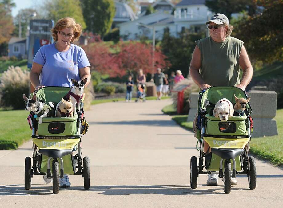"Ruff riders: Joyce and Jerry McLain may be getting some exercise ""walking"" their dogs along the Black River in South 