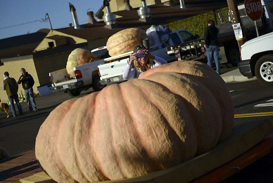 """The 40th Annual Safeway World Championship Pumpkin Weigh-Off was held in Half Moon Bay, Monday, October 14, as the kick-off to Half Moon Bay's world-famous Art & Pumpkin Festival which takes place October 19-20. Organizers are offering a $25,000 mega-prize for a new world record pumpkin entered at Half Moon Bay, considered the """"Super Bowl of Weigh-Offs."""" Photo: Stephen McLaren"""