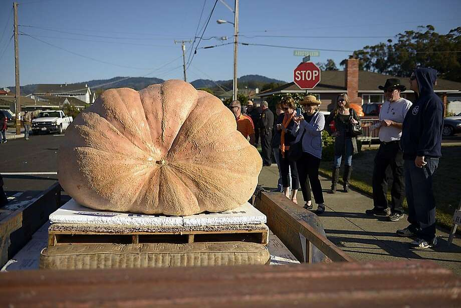 "The 40th Annual Safeway World Championship Pumpkin Weigh-Off was held in Half Moon Bay, Monday, October 14, as the kick-off to Half Moon Bay's world-famous Art & Pumpkin Festival which takes place October 19-20. Organizers are offering a $25,000 mega-prize for a new world record pumpkin entered at Half Moon Bay, considered the ""Super Bowl of Weigh-Offs."" Photo: Stephen McLaren"